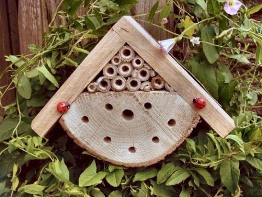 Petite maison à insectes