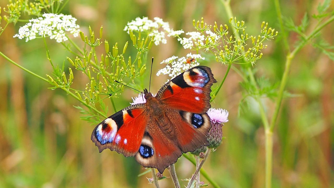 Insekten und Nützlinge