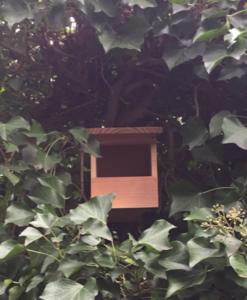 Halboffenes Vogelhaus für Rotkehlchen