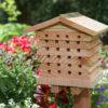 abeilles solitaires 1